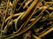 Seaweed Braids