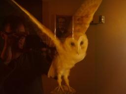 Spooky Stuffed Owl