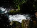 Sweet flowing life