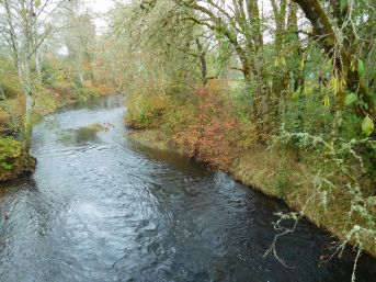 Nehalem River in Vernonia