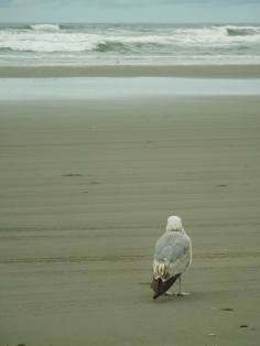 Seagull Television
