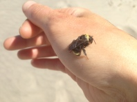 Bee Rescued from Ocean