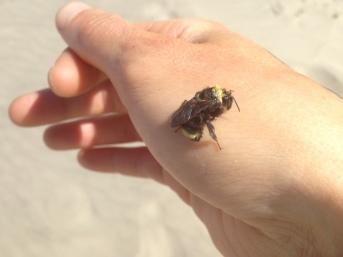 Bee Rescued from Ocean
