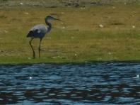 resident of hyatt lake